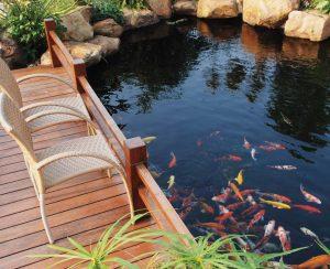 Thiết kế hồ cá Koi chuyên nghiệp uy tín toàn quốc.