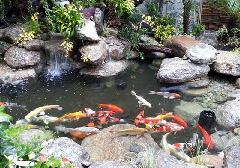 Thiết kế hồ cá koi đẹp có thác nước.