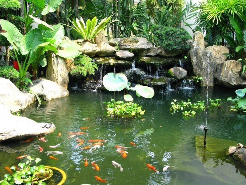 Các nguyên tắc cần tuân thủ để có một hồ cá Koi đẹp