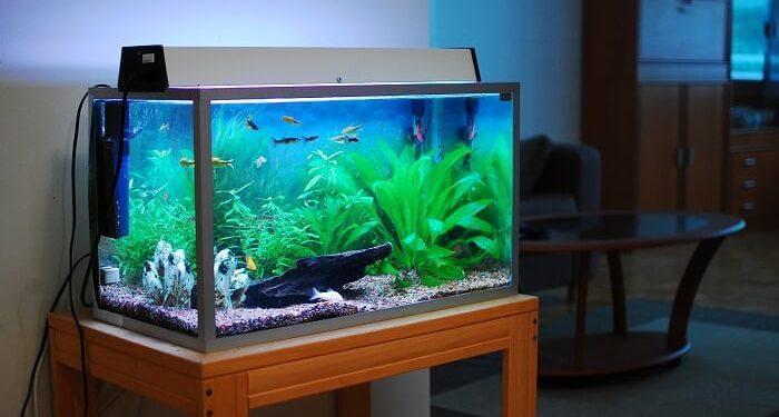 Các phương pháp lọc hồ cá Koi