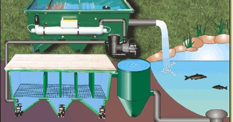 Các mô hình thiết kế hệ thống hồ cá Koi