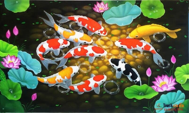 Cách chăm sóc những chú cá Koi Shiro Utsuri