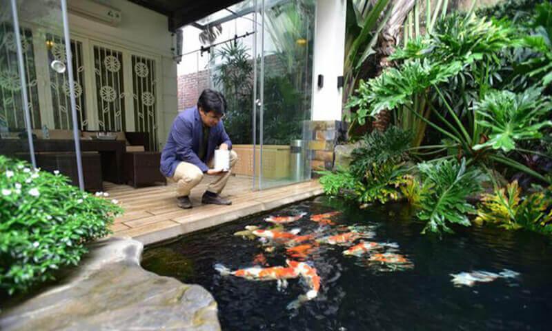 Cách xử lý hồ trước khi thả cá vào