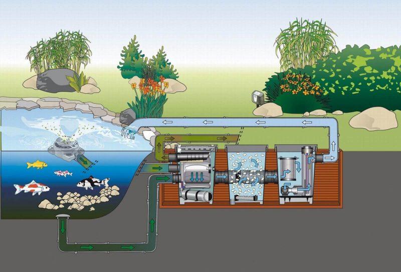Mẫu bản vẽ thiết kế hồ cá Koi sân vườn