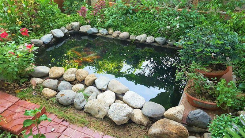 Một số lưu ý khi chọn đá làm hồ cá Koi
