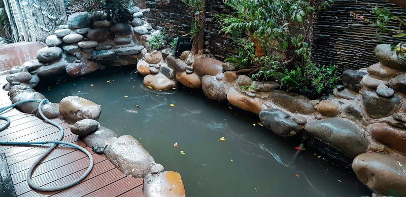 Mua đá làm hồ cá Koi ở đâu tốt nhất?