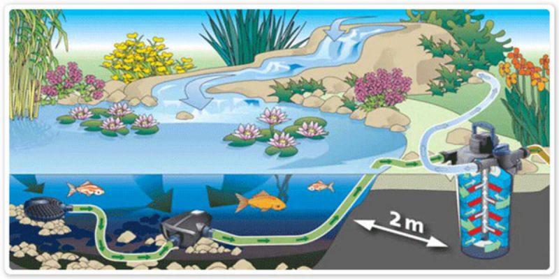 Nguyên lý lọc hồ cá Koi cơ bản khi vận hành