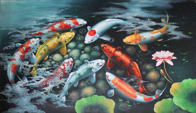 Sơ lược về cá Koi