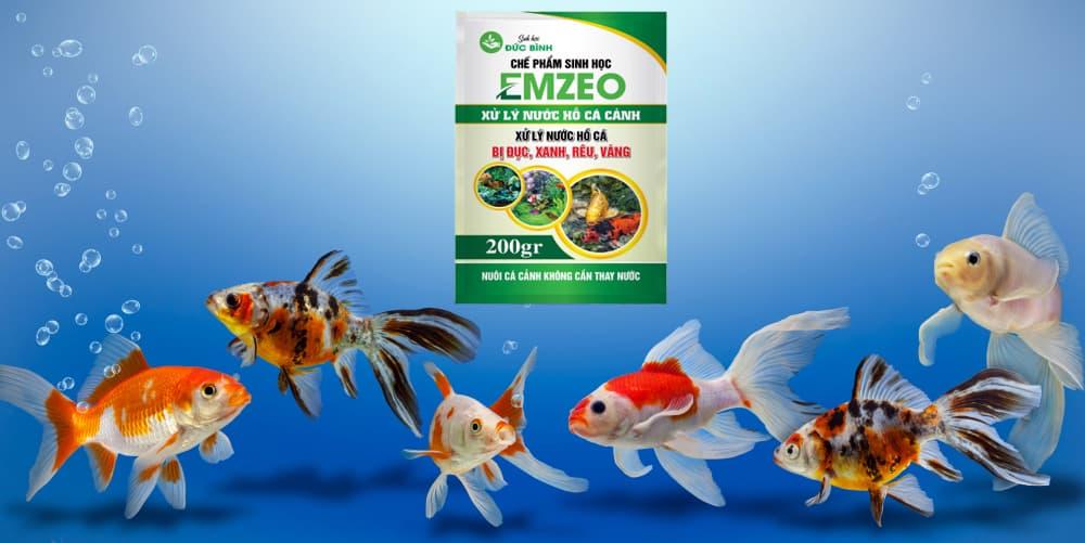 Sử dụng những chế phẩm sinh học làm sạch nước hồ cá an toàn