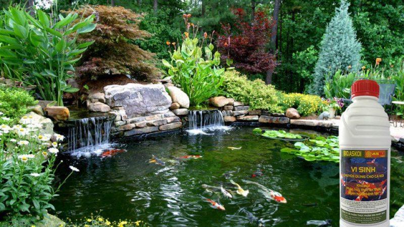 Sự kết hợp của các loại men vi sinh để ổn định trong nguồn nước