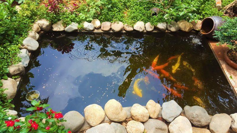 """Tại sao hồ cá Koi được nhiều khách hàng """"săn đón"""""""