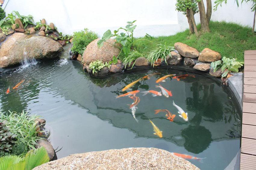 Tầm quan trọng của việc làm trong nước hồ cá ngoài trời