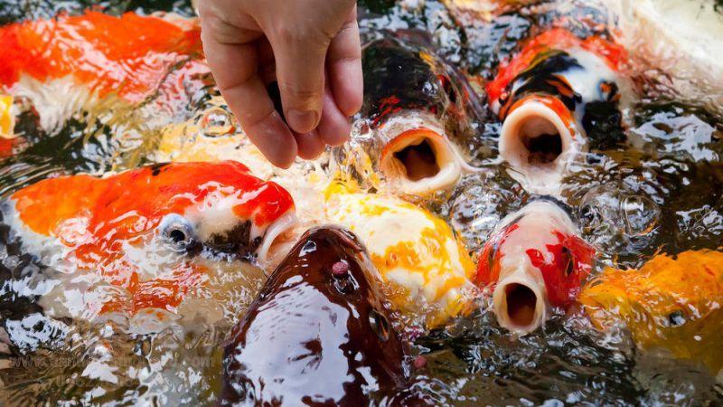 Thức ăn của cá