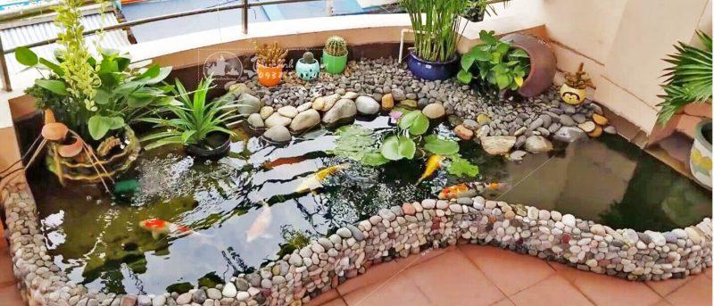 Ý tưởng thiết kế hồ cá Koi ở trong nhà