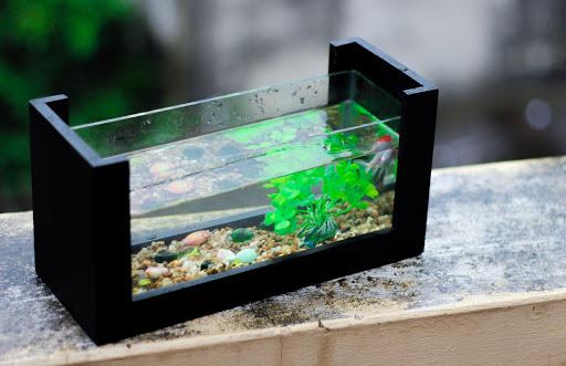 5 Nguyên tắc đặt bể cá mini hợp phong thủy