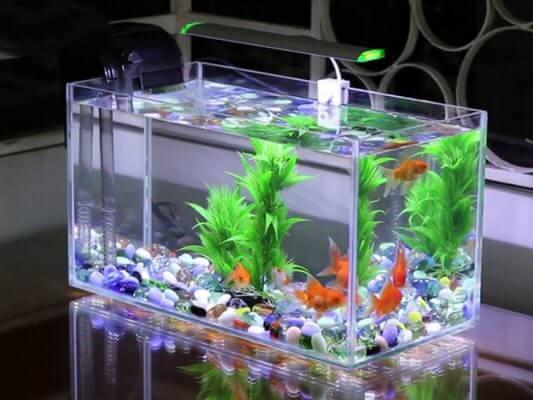 Bể cá mini kính dán