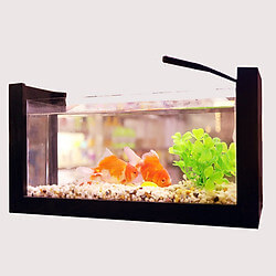 Bể cá mini viền gỗ