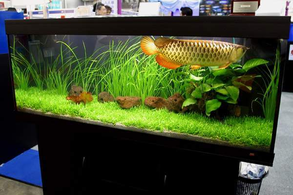Các yếu tố ảnh hưởng đến sự phát triển của vi sinh trong bể cá