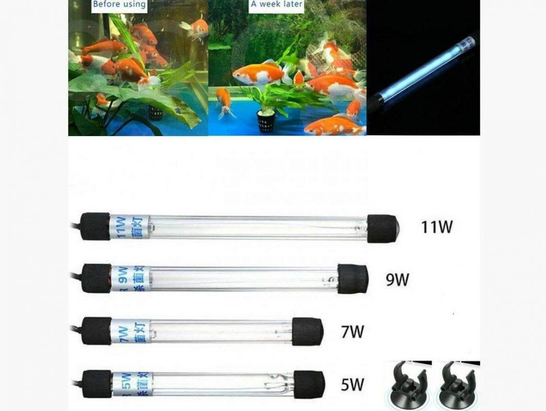 Cách chọn đèn UV cho hồ cá