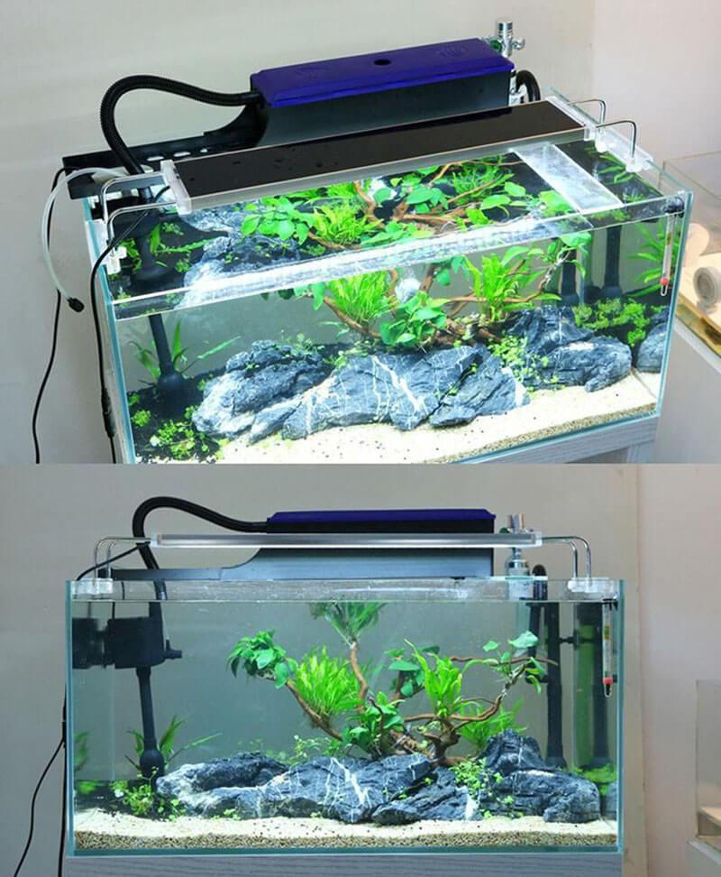 Cách chọn máy lọc thích hợp cho hồ cá của bạn