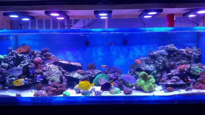 Cách chọn máy oxy hồ cá sao cho phù hợp với ngôi nhà của bạn