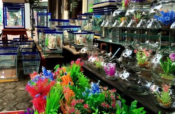 Cách chọn mua phụ kiện bể cá sao cho phù hợp nhất