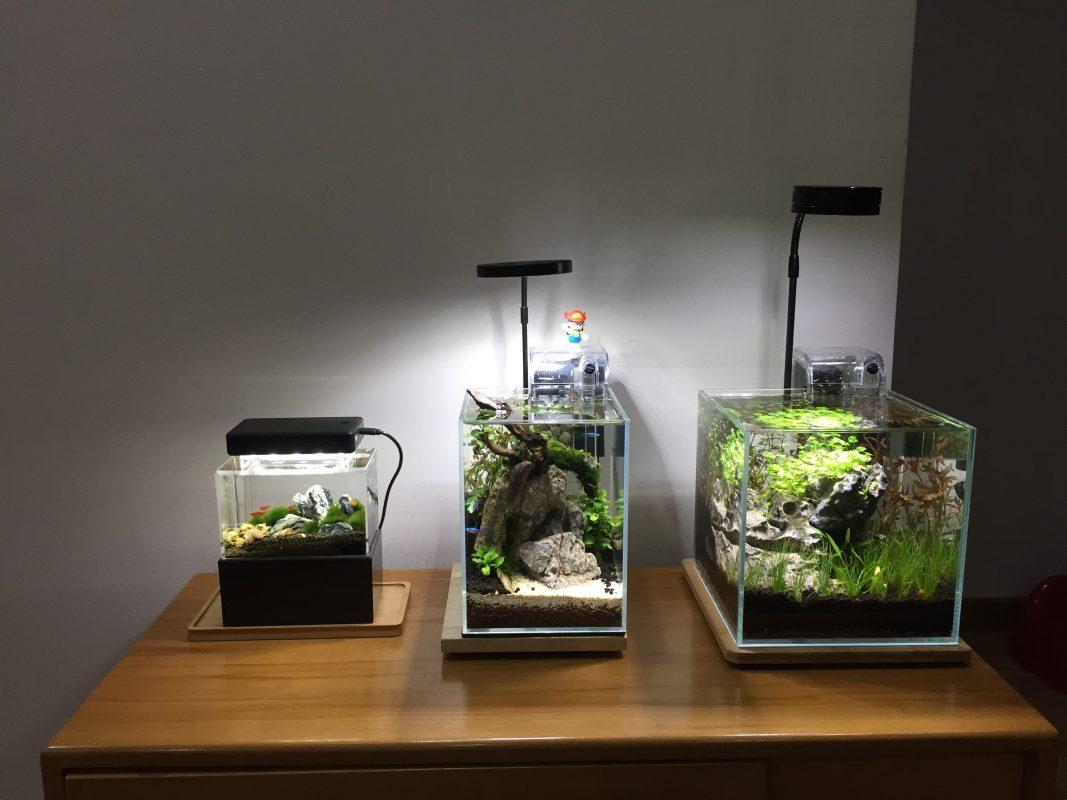 Công dụng của đèn led cho bể cá