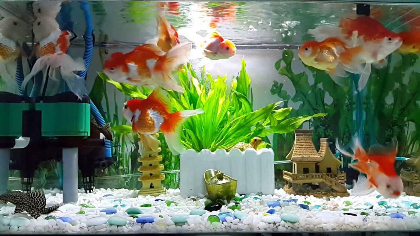 Địa chỉ cung cấp những mẫu hồ kính nuôi cá đẹp và uy tín nhất hiện nay