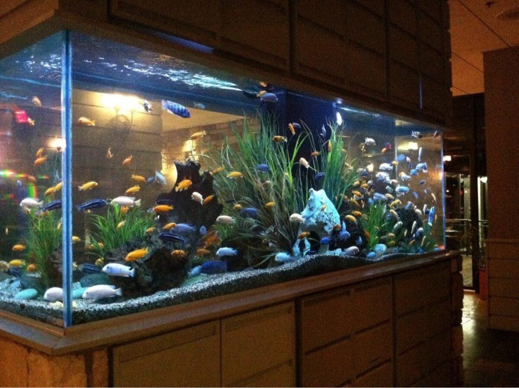 Điểm khác biệt giữa hồ kính nuôi cá và bể xi măng