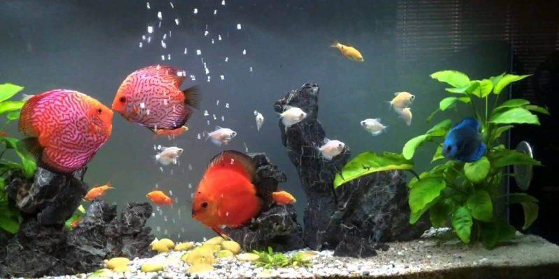 Giới thiệu khát quát về thức ăn cho cá