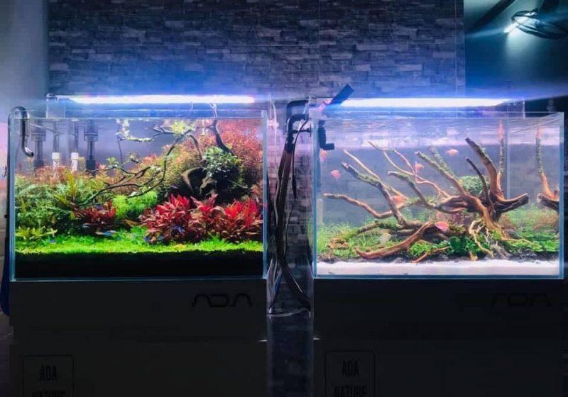 Hệ thống ánh sáng cho bể thủy sinh