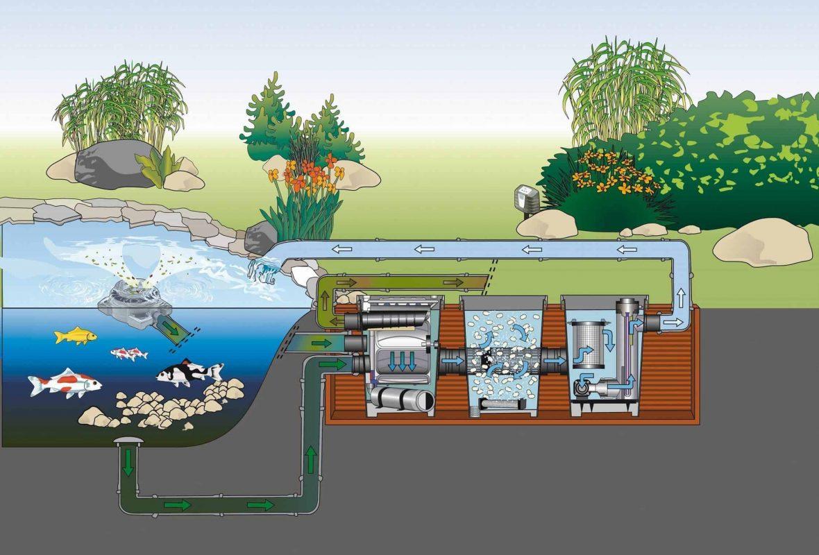 Hệ thống lọc nước hồ cá koi ngoài trời gồm những gì