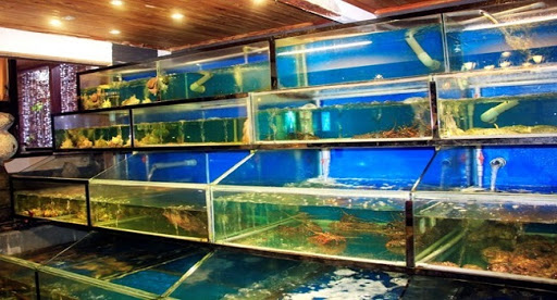 Hướng dẫn cách thiết kế hồ hải sản hiệu quả