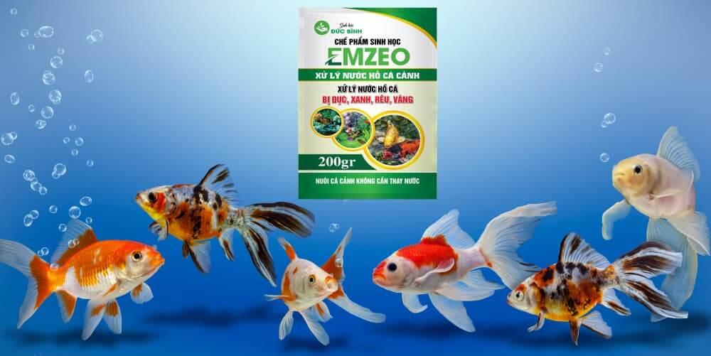 Kinh nghiệm về vi sinh và hệ thống lọc cho bể cá