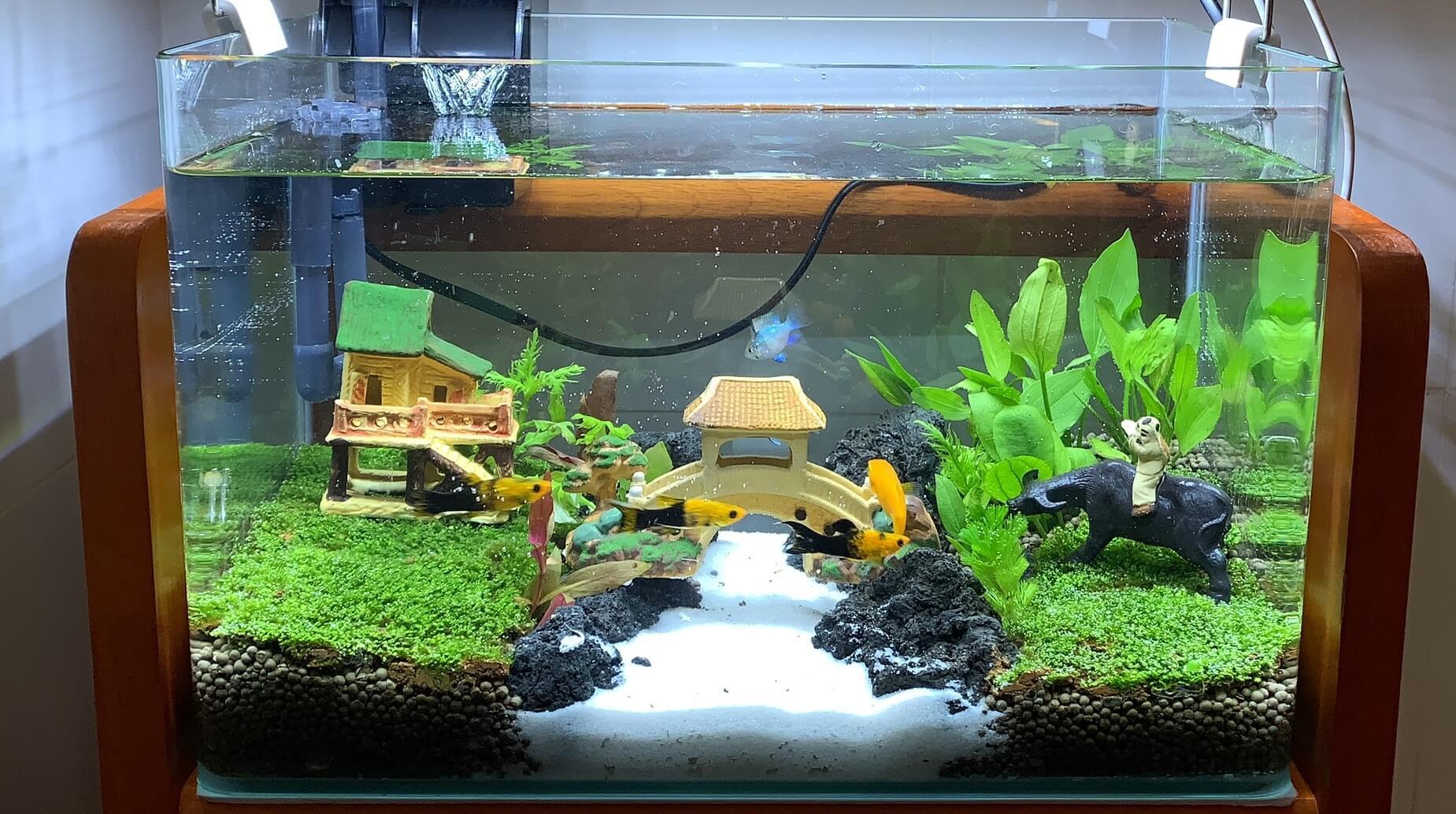 Lựa chọn hồ cá phù hợp cho không gian sống