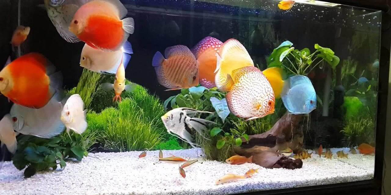 Lựa chọn loại cá phù hợp