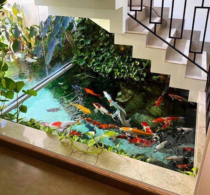 Mẫu hồ cá Koi trong nhà