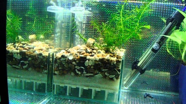 Máy lọc nước bể cá là gì?