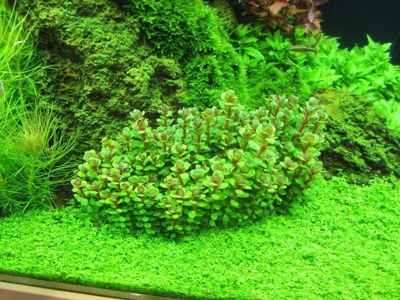 Một số loại cây thủy sinh