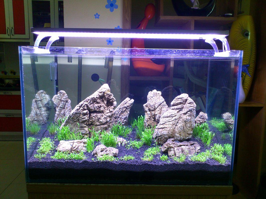 Năm cách chiếu sáng cho đèn hồ cá đạt hiệu quả