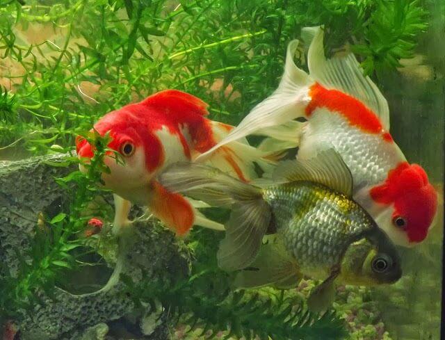 Những kĩ thuật nuôi cá cảnh mà bạn nên biết
