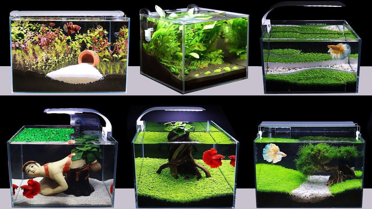 Những lưu ý khi chọn mua bể cá mini cho nhà bạn
