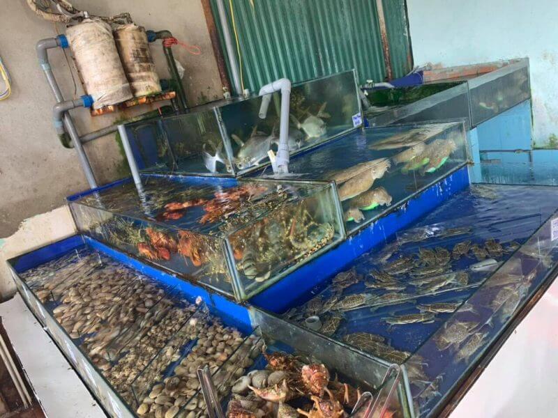 Những lưu ý khi lắp đặt bể hải sản