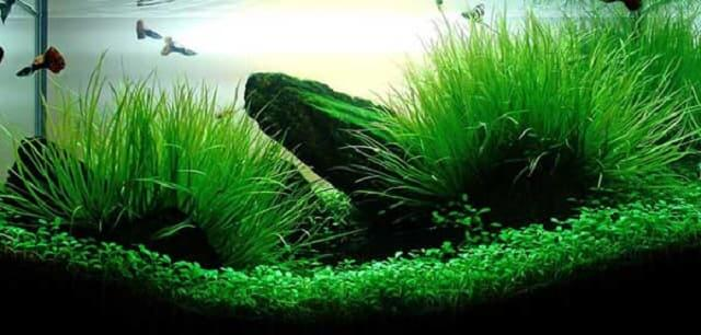 Những lưu ý khi tạo vi sinh cho bể cá