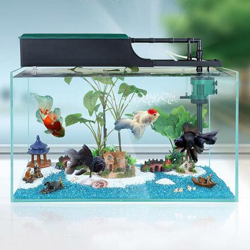 Phụ kiện bể cá là gì?