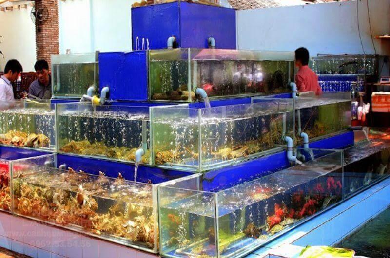 Quy trình thiết kế và thi công bể hải sản