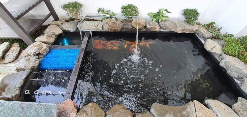 Tác dụng của chổi lọc nước hồ cá