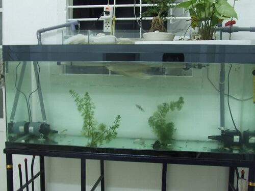 Tác dụng của vi sinh đối với bể cá