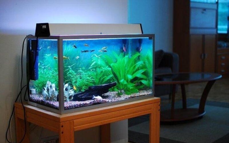 Tại sao cần dùng lọc thùng SunSun cho bể cá?