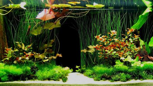 Vật trang trí hồ cá